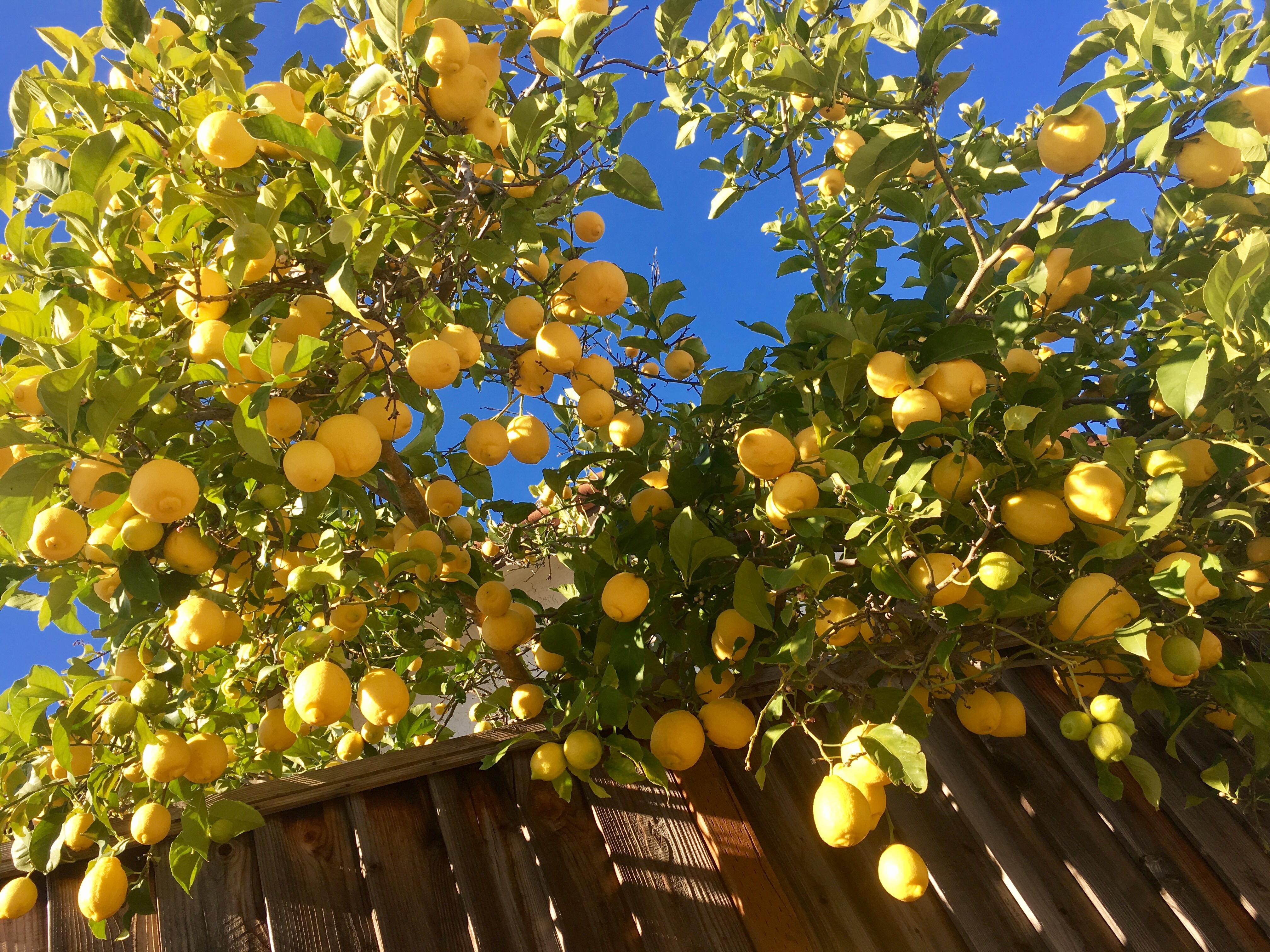 lemonpancakes11